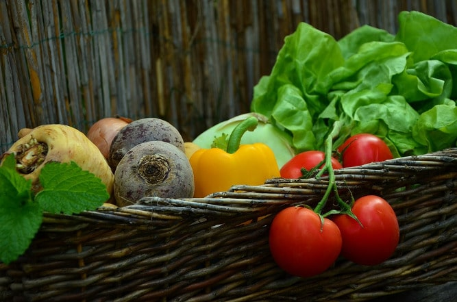 legumes_ecommerce_bio